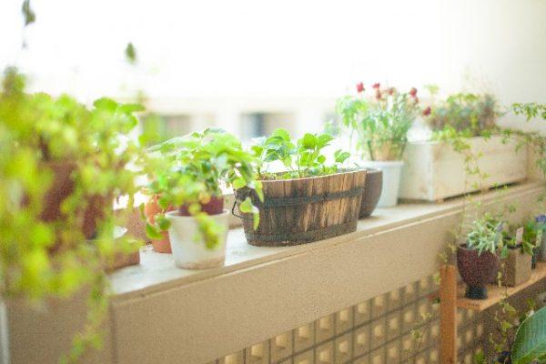プランターで育てる植物