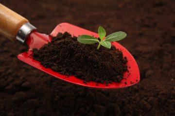 コーヒかす肥料で作物を育てる