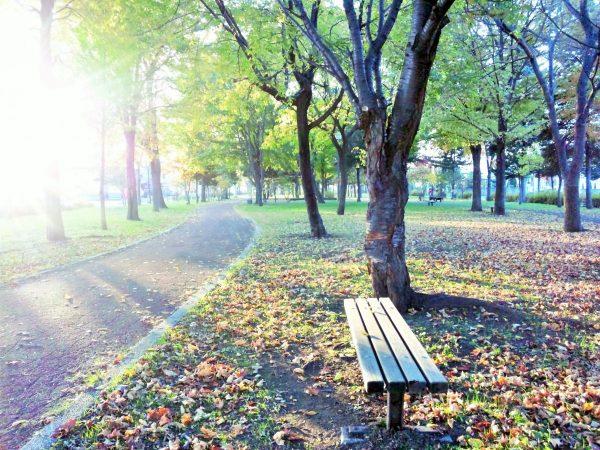 公園でディカフェコーヒーを楽しむ