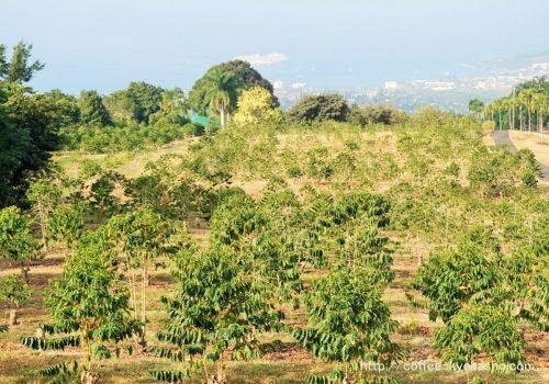 世界のコーヒー農園