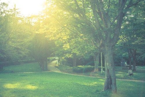 光が差し込む公園
