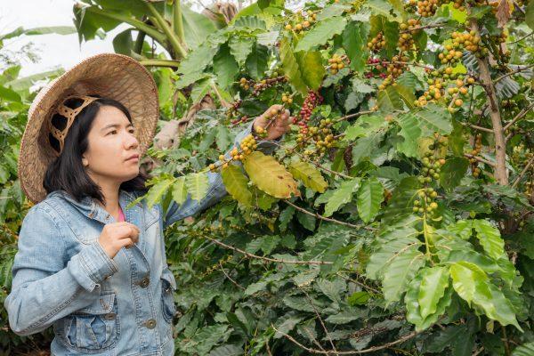 ベトナム コーヒー農園