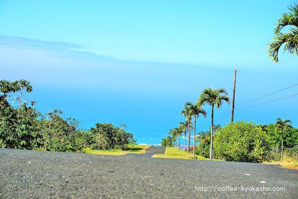 ハワイ コーヒー農園