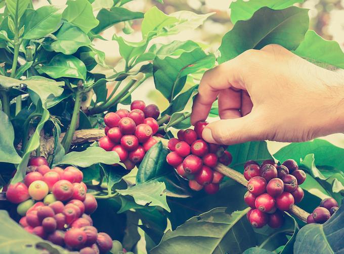 ベトナムコーヒーの違い