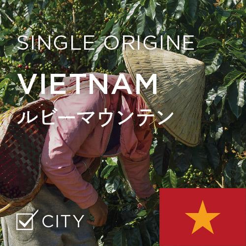 ベトナムのコーヒー豆♫ 貴重なアラビカ種 ルビーマウンテン