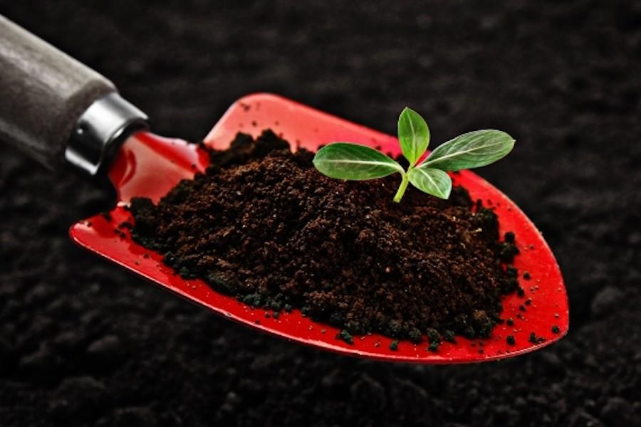 コーヒー かす 畑